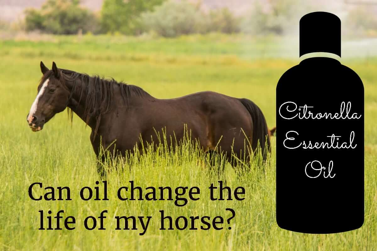 Can oil change the life of my horse?