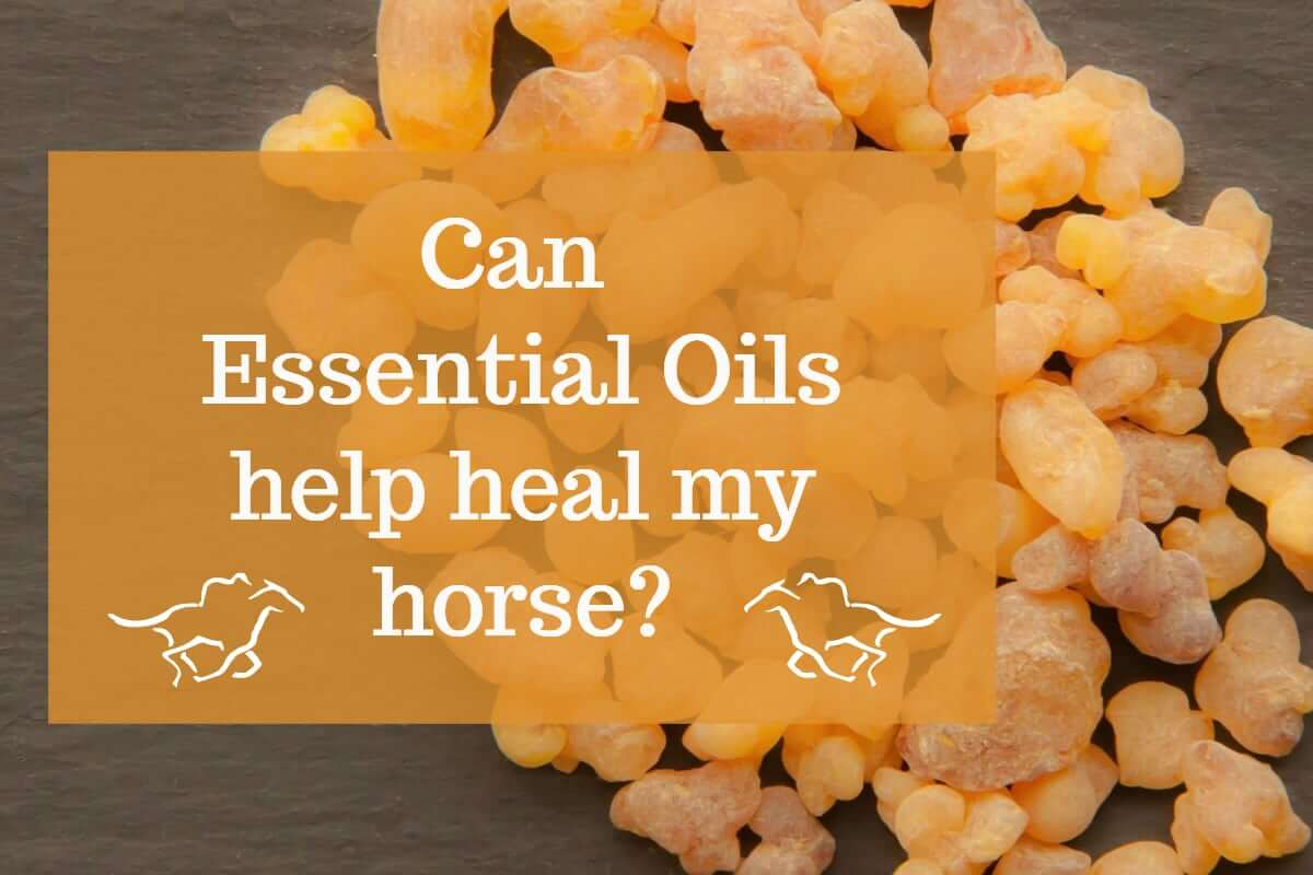 Can essential oils help heal your horse?